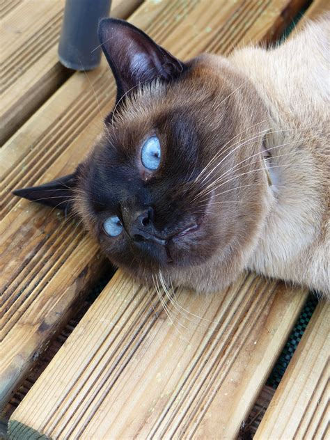 Chats Yeux Doux